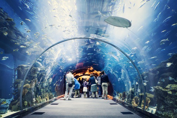 Dubai-Mall-Aquarium-e1415950438705