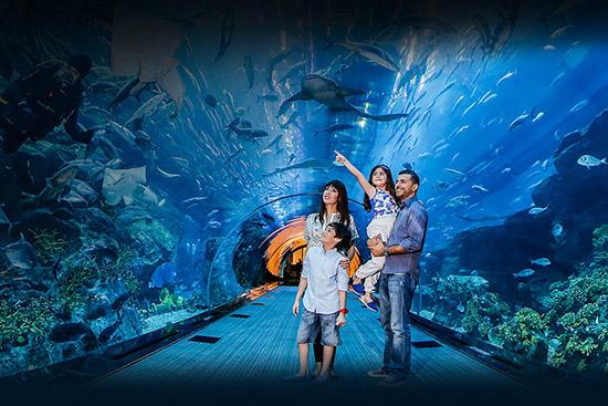 article-places-kids-love-inarticle-dubai-aquarium