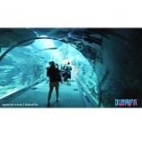ویدیو آکواریوم دبی و باغ وحش زیر آب دبی مال - اختصاصی بیسان گشت