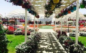 باغ پروانه دبی