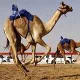 مسابقه بزرگ شتر سواری به زودی در دبی برگزار میشود